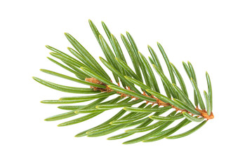 Close-up of Christmas tree branches isolated on white background