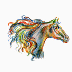 Horse hand drawn colorful illustration isolated on white background, decorative animal painted coloring pencil, doodle sketch for design patterns, greeting card, scrapbook, tattoo, logo, mascot design