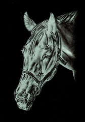Freehand horse head pencil drawing negative black