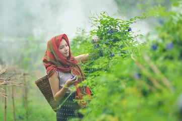 Beautiful Thai local woman working happy,thailand,thailand woman,Thailand culture,thailand buautiful farmer