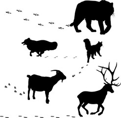 five animals silhouettes and tracks on white