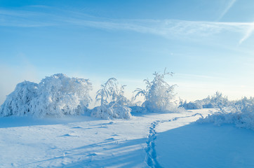 Beautiful landscape with trees covered by snow. Cold day in the snowy winter forest. Toned.