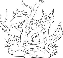 lynx wanders in search of food