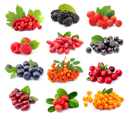 Collage of wild berry isolated