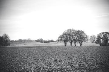 Bepflanztes Feld im Winter in Rheinhessen