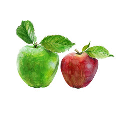 Watercolor red and green apples on a white background.