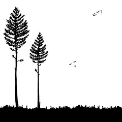 Vector pine forest landscape. Beautiful hand drawn illustration - dark forest with pine trees, outdoor scene in black and white