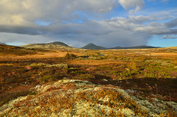 Norwegian autumn landscape with reindeer moss near Ringebu and National park Rondane. Norway.