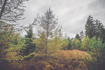 Scandinavian forest in autumn
