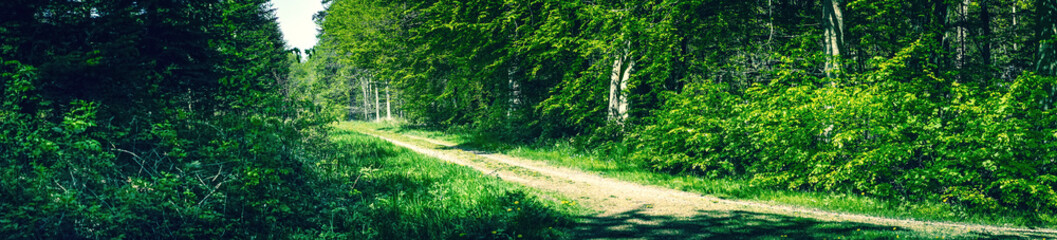Panorama landscape in a danish forest