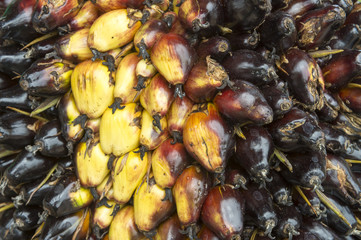 Close-up of the oily fruit of the dende (dendê) palm at a harvest in Bahia, Brazil