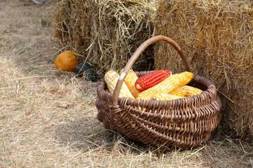 raw corn basket