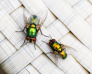Macro of colorful flies - Shallow depth of field