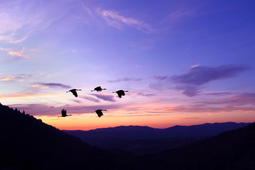 Purple sky on sunset or sunrise with flying birds natural backgr