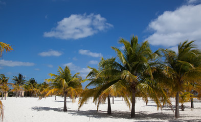 palm trees on a background of white sand beach and blue sky