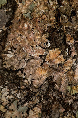 Lichen #6