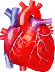 Realistic human heart in low poly with veins and aorta in red, purple and blue