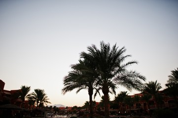 The tops of palm trees background evening sky