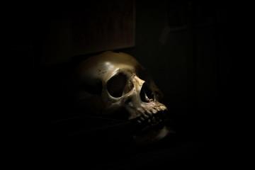 skull bone in darkroom