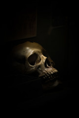skull bone in darkroom