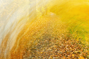 Autumn leaf fall. Bright abstract background in gold tones remov