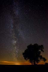 Milchstraße Baum