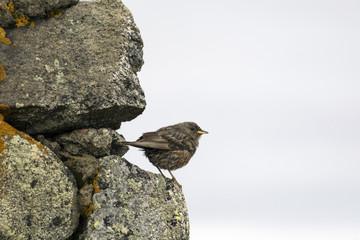 Sparrow on the rock