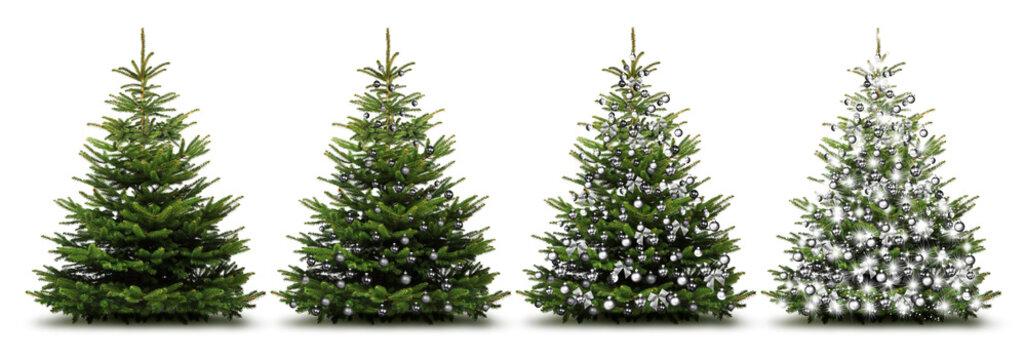 Weihnachtliche Silberne Tannenbäume