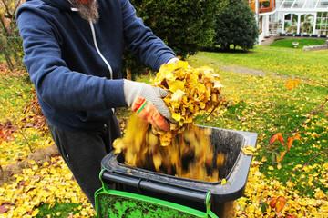 Gartenarbeit, Herbst, Mann wirft abgefallene gelbe Laubblätter in eine Biomülltonne