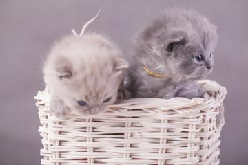 kotki w koszyku