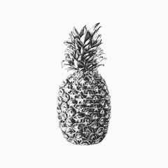 Hand drawn vector pineapple illustration
