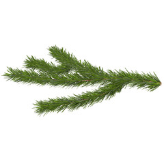 fir tree isolated on white, 3d illustration
