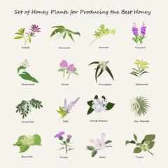 Honey planty set for produsing the best honey. Flowers eps10 vector illustration.