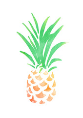 Pineapple,hand drawn and watercolor.