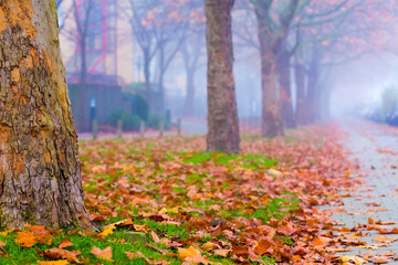Autumn street in city with yellow leaves in fog