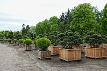 bonsai plants and trees in a garden shop