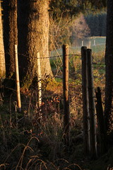 Fence in the last sunlight