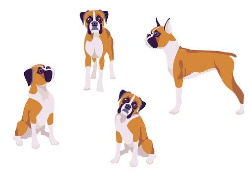 Vector illustration of dog boxer breed on white background