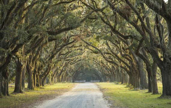 Long avenue of oaks in Savannah, Georgia