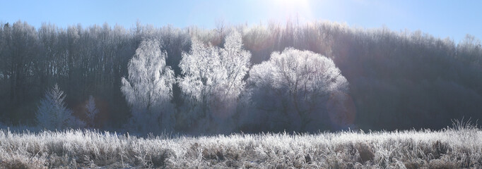 Winter Christmas background. Morning sun illuminate white frosty trees.