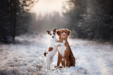 two dogs winter mood, friendship and love