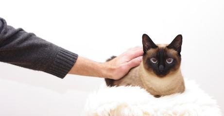 süße Katze als Haustier