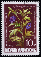 "USSR - CIRCA 1972. Postage stamp of the series ""Medicinal Plants"" with a picture of Kangaroo Apple (Solanum laciniatum Ait), circa 1972"