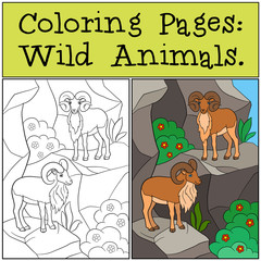 Coloring Pages: Wild Animals. Two beautiful urials on the mounta