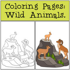 Coloring Pages: Wild Animals. Mother, father and baby urial.