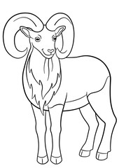 Coloring pages. Cute beautiful urial with great horns.