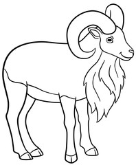 Coloring pages. Cute beautiful urial with big horns.
