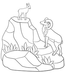 Coloring pages. Father and baby urial on the mountains.