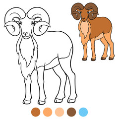 Color me: urial. Cute beautiful urial with great horns.