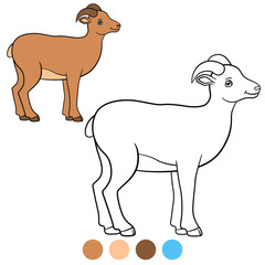 Color me: urial. Little cute lady urial smiles.